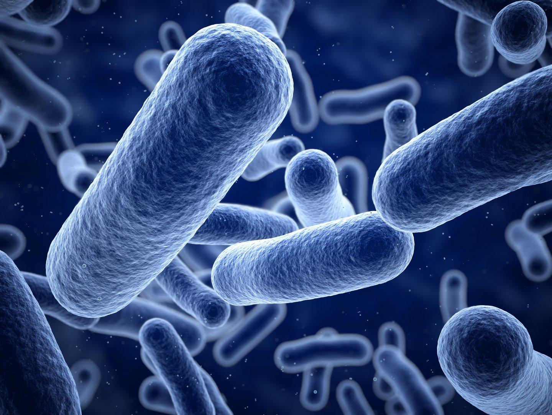 6a840f423 تشير هذه الدراسة إلى أن علاج سكري النوع الثاني قد يعطي نتائج أفضل إذا قمنا  بتغيير تركيبة بكتيريا الأمعاء. ففي حين يستخدم الميتفورمين بالذات بشكل شائع  ...